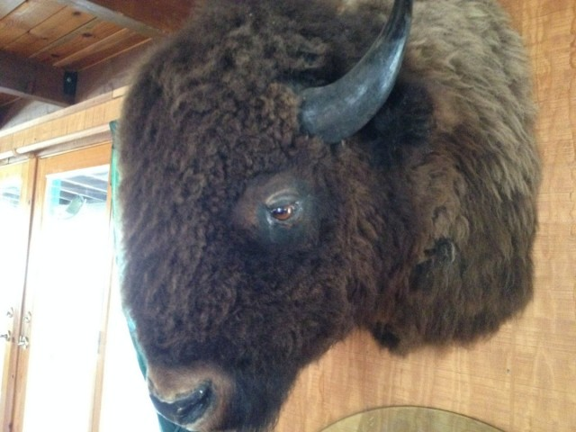 Included in the photos D&D sent us, was this buffalo head. Clearly a sign of pre-production madness.