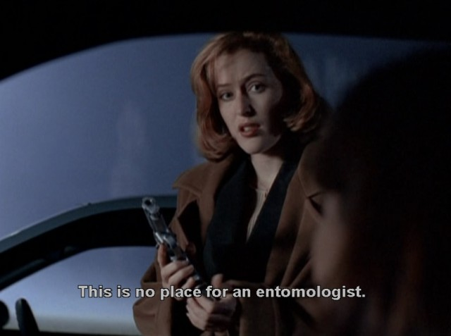 This is no place for an entomologist