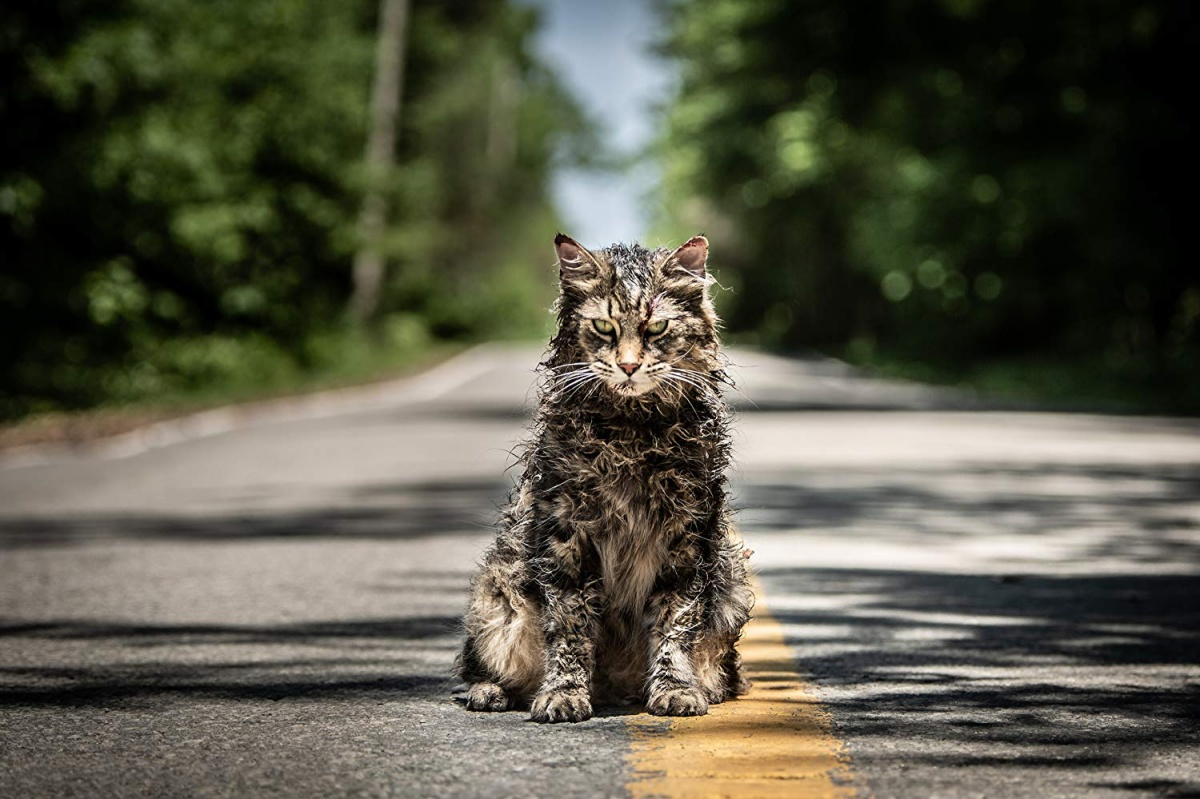 Pet Sematary Cat sitting in the road