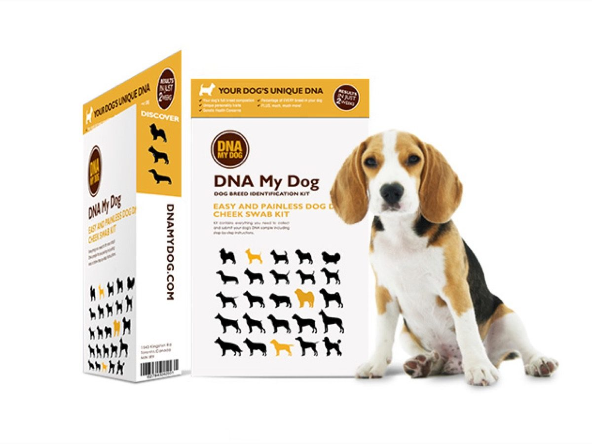 Dog DNA test kit.