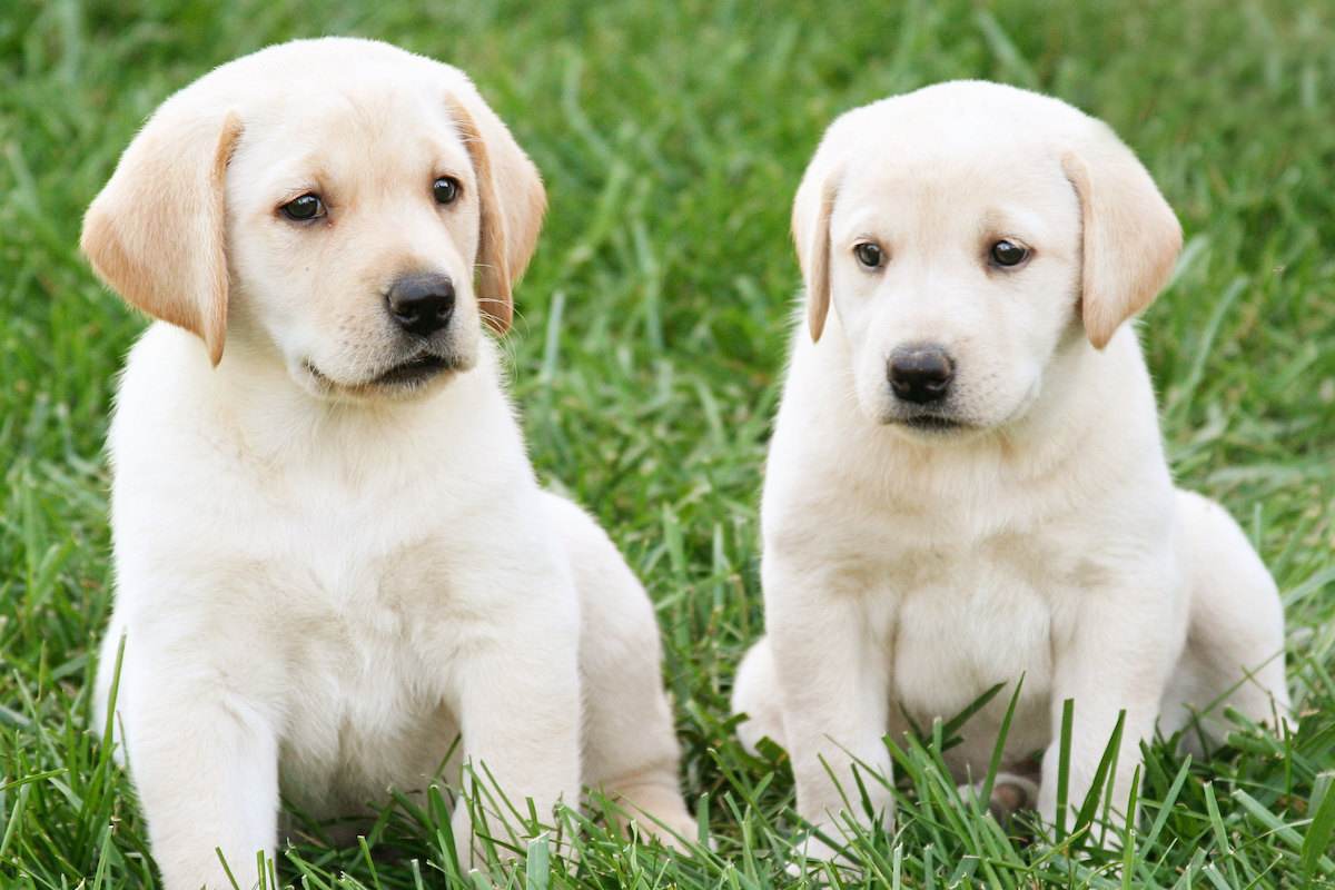 A couple of cute dogs who are definitely NTA.